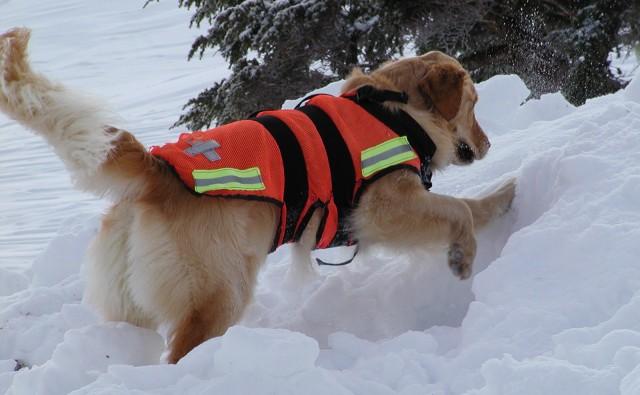 "alt=""perro de rescate nieve"""