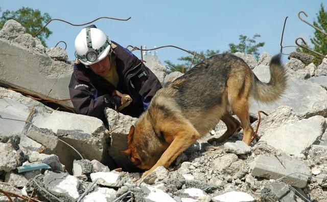 "alt=""perros de rescate"""
