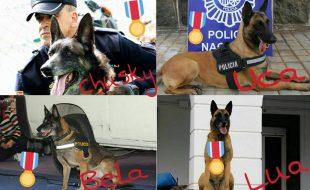 cuatro agentes caninos