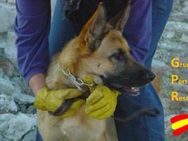 Grupos de rescate con perros