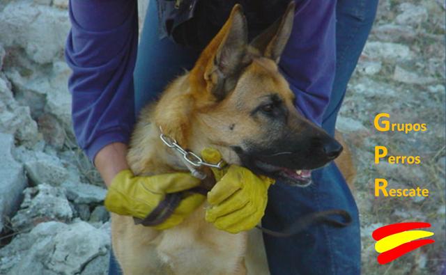 """alt=""""Grupos de rescate con perros"""""""