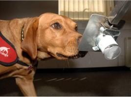 """alt=""""perro detector de cáncer"""""""