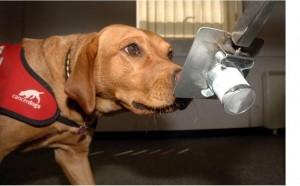 Perros-detectan-cancer