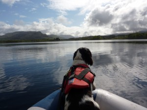 DVSD-Fern-in-Loch-Awe-search