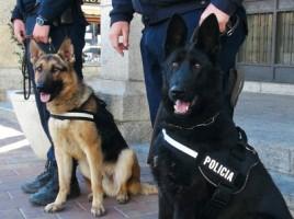 """alt=""""perros unidad canina Zarzaquemada"""""""