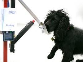 "alt=""perro detector cáncer"""