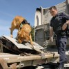 """alt=""""perro detector Policía"""""""