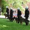 """alt=""""perros policía Suecia"""""""