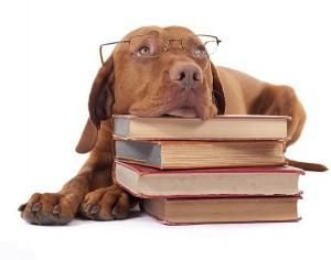 Biblioteca de PerrosdeBusqueda