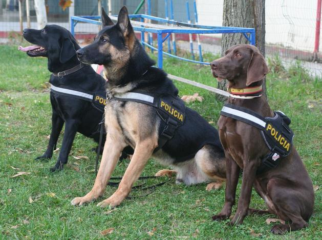 Varios perros del CNP