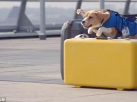 """alt=""""perro detector objetos perdidos"""""""