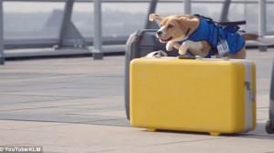 Sherlock, un perro actor