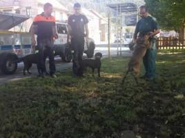 """alt=""""perros de búsqueda desaparecido Pontevedra"""""""