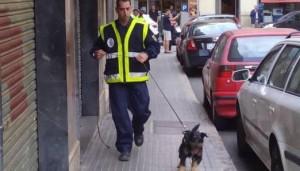 Un agente con unode los perros detectores de acelerantes