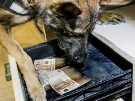 """alt=""""Perro detector dinero"""""""