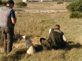 "alt=""perros detectores venenos Andalucía"""