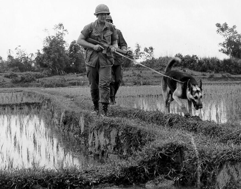 scoutdog