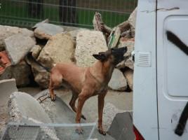 "alt=""perros de rescate campeonato Guardia Civil"""