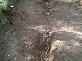 """alt=""""perro detector restos humanos antiguos"""""""