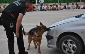 PL-Alberic con perro busca coche