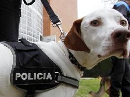 """alt=""""perro detecta droga estación buses Alicante"""""""