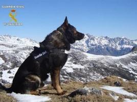 "alt=""Eddie perro Guardia Civil fallecido"""