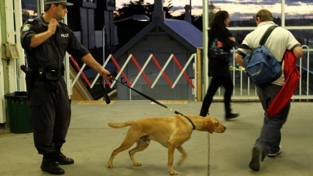 """perros detectores drogas Australia"""