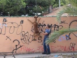 """alt=""""Perro detector Policía Local Paterna"""""""