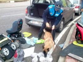 """alt""""Perro detector de P-Local Vª del Pardillo"""""""
