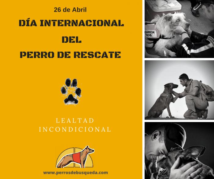 """alt=""""día internacional perro rescate"""""""