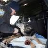 """alt=""""despedida perro policía Sultán eutanasia"""""""