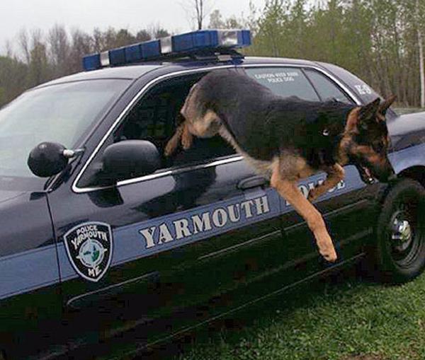 "alt=""despedida perro policía eutanasia"""
