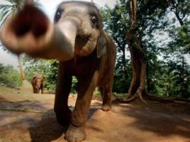 "alt=elefantes detectores de explosivos"""