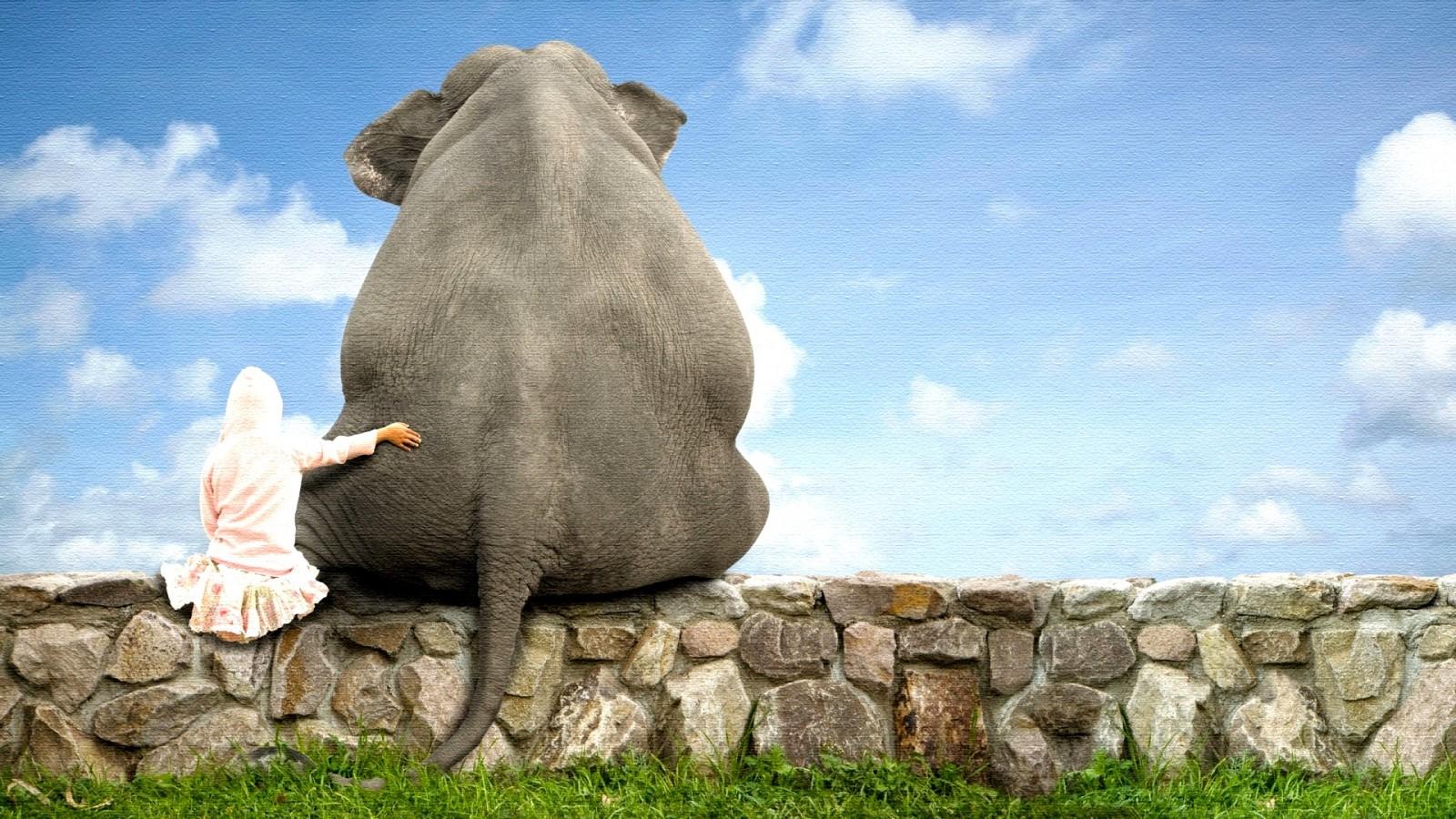 "alt=""elefante sentado con humano"""