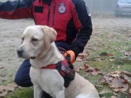 "alt=""Bruma perro de rescate"""