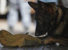 "alt=""perro policia Brasil mundial"""