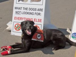 """alt=""""perro detector mejillones barcos Alberta"""""""