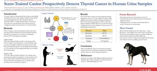 """alt=""""cuadro perro detector tiroides"""""""