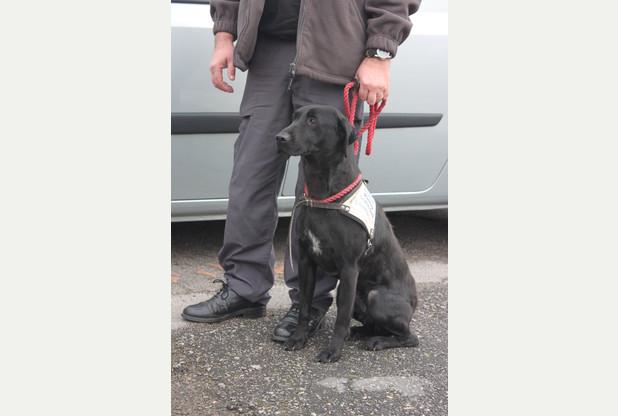 """alt=""""perro detector propiedad robada"""