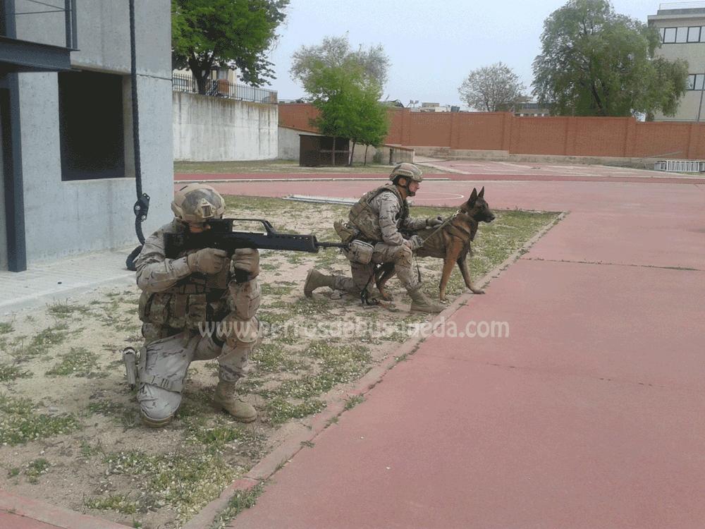 """alt=""""ECIDEF- Escuela Cinológica de la Defensa"""""""