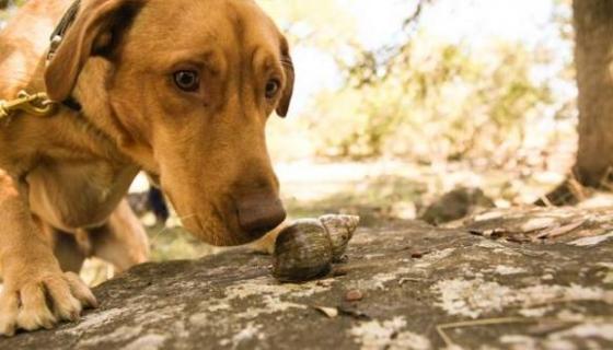 """alt=""""perros-detectan-caracoles"""""""