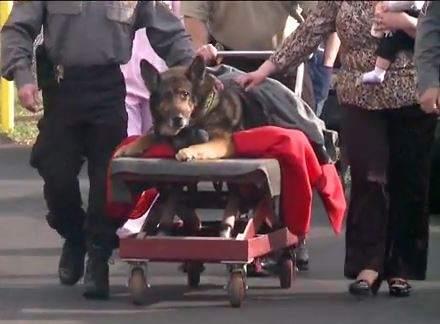 "alt=""despedida perro policia Zeus"""