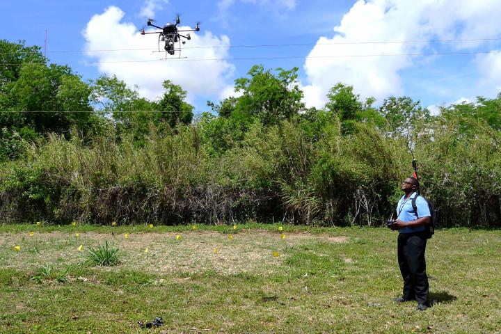 """alt=""""drones y perros protegen aguacate"""""""