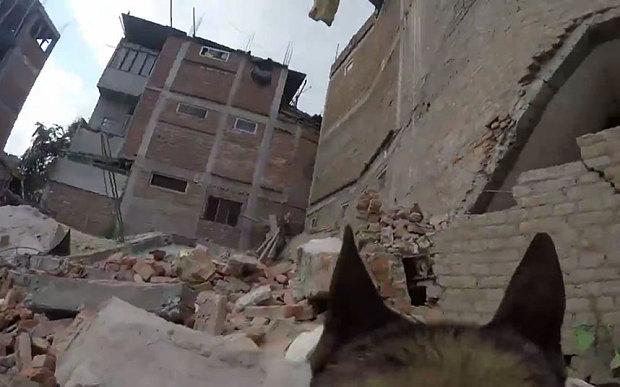 """alt=""""perro de rescate con cámara en Nepal"""""""