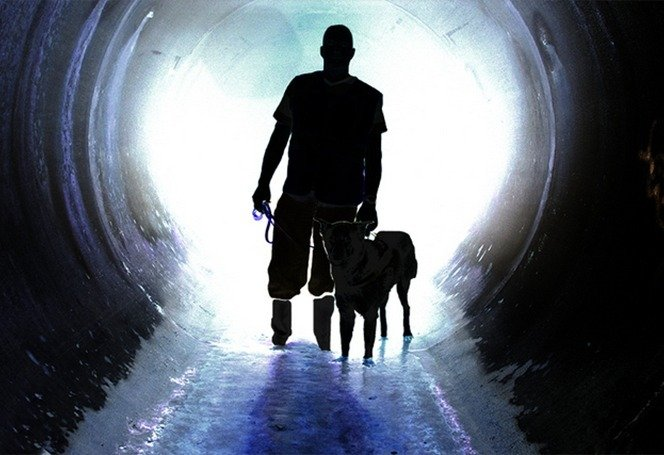 "alt=""perros detectores aguas contaminadas"""