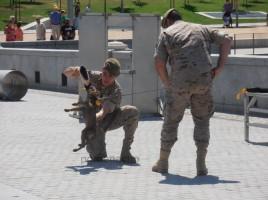 """alt=""""Día Fuerzas Armadas cachorra"""""""