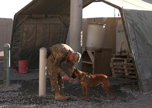 """alt=""""perros militares EEUU vuelven a casa"""""""