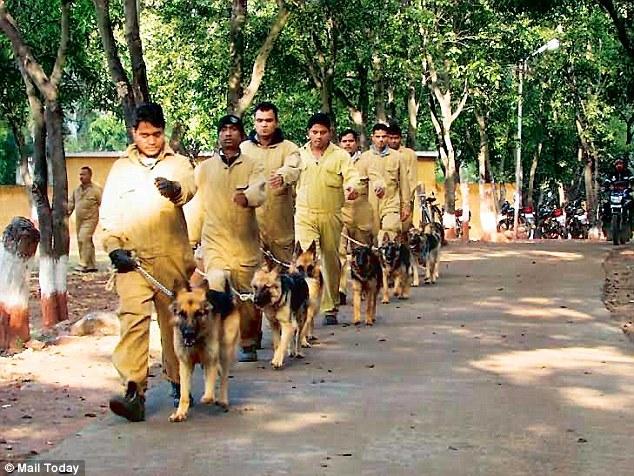 "alt=""14 perros contra caza furtiva en India"""