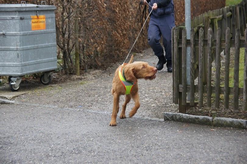 """alt=""""perros detectores en terreno urbano"""""""