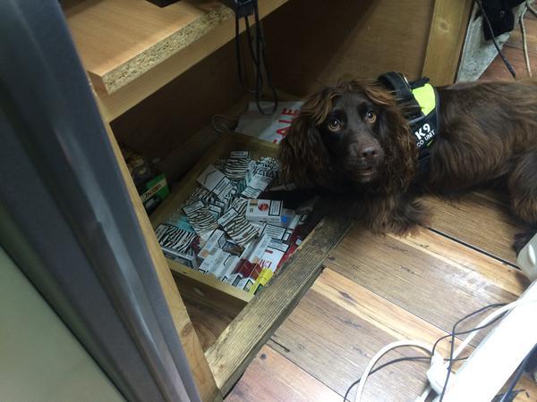 Perro-detecta-tabaco